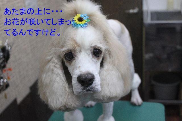 お誕生日!!_b0130018_83287.jpg