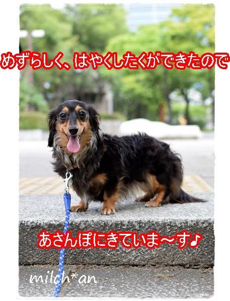 b0115642_1625057.jpg