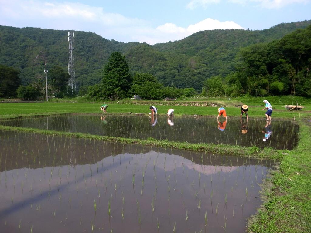 岡山田植えレポート_c0226146_19563827.jpg