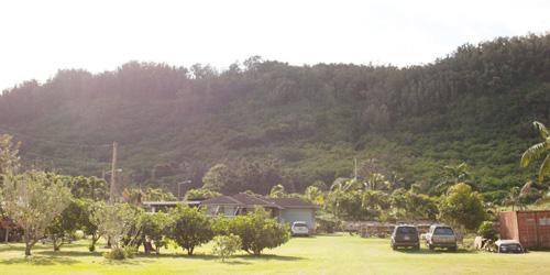 ハワイからインスパイアされた、ala LEHUA <アラ・レフア>_c0156749_15271267.jpg