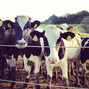 牛の好奇心。牛への好奇心。_f0326862_22180692.jpg
