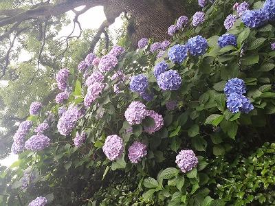 紀尾井町のオーバカナル_e0139694_14554152.jpg