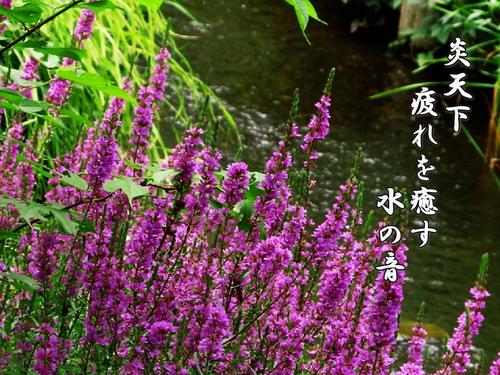 f0137096_191561.jpg