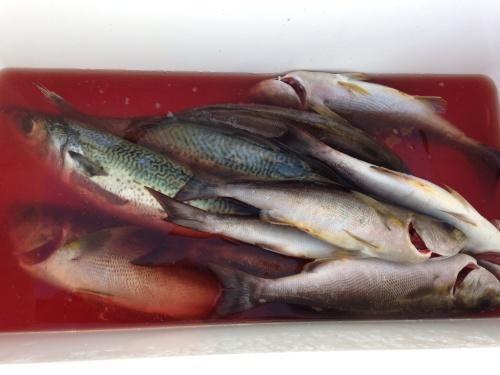 26日グンカン廻り夜釣りの釣果は?(^-^)/_d0114397_07393592.jpg