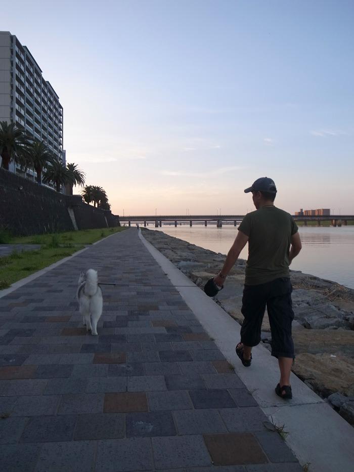 朝から暑い! 短めさんぽ (*^_^*)_c0049299_1547345.jpg