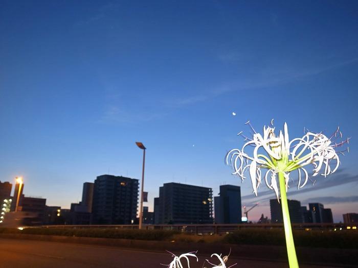 朝から暑い! 短めさんぽ (*^_^*)_c0049299_15495914.jpg