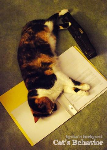 猫の習性に邪魔される夜_b0253205_3493527.jpg