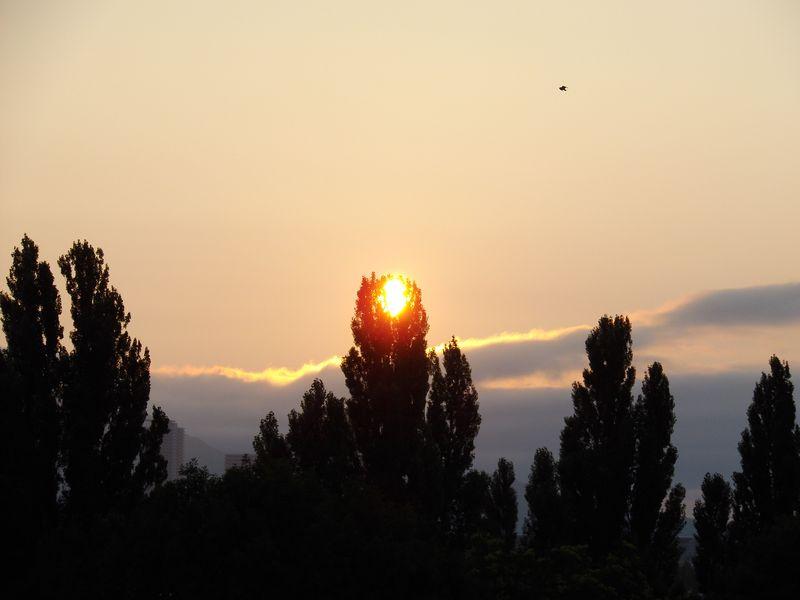 ポプラ並木の御神鏡_c0025115_18494149.jpg