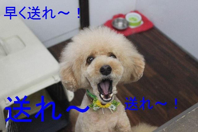食べちゃった~!!_b0130018_0173962.jpg