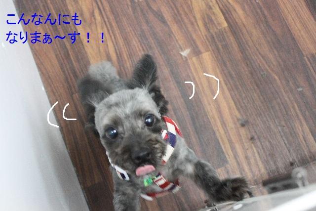 食べちゃった~!!_b0130018_852426.jpg