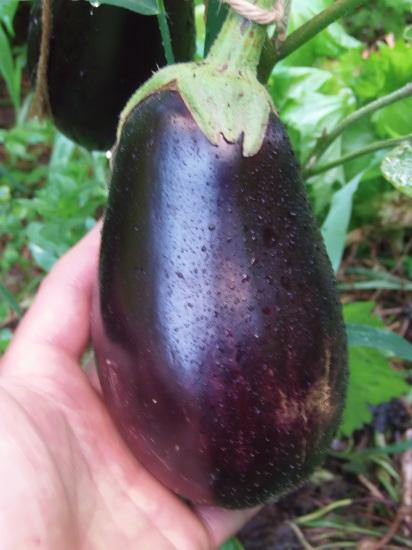 自然農の野菜の「モーリョ」ソースで。_a0125419_19482579.jpg