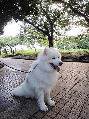 日曜おじ散歩_c0062832_7214344.jpg