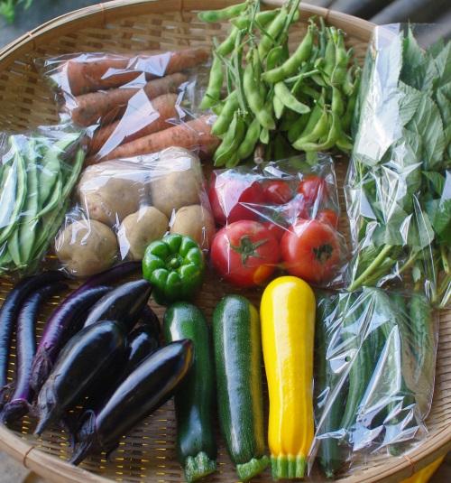 今週の野菜セット(7/29~8/2着)_c0110869_1493289.jpg