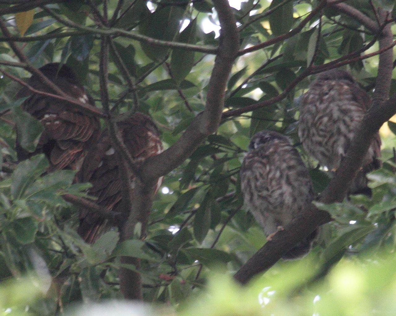 ついに雛が2羽巣立ちました!_f0105570_21265976.jpg