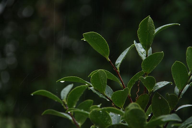 雨_c0177785_5181063.jpg