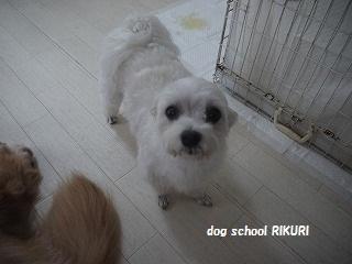 RIKURI幼稚園 ー水曜日編ー_a0284100_1042874.jpg