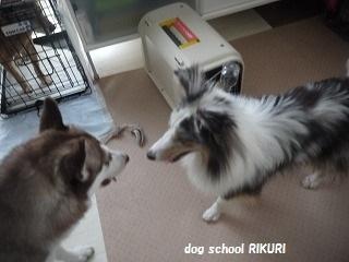 RIKURI幼稚園 ー水曜日編ー_a0284100_1130176.jpg