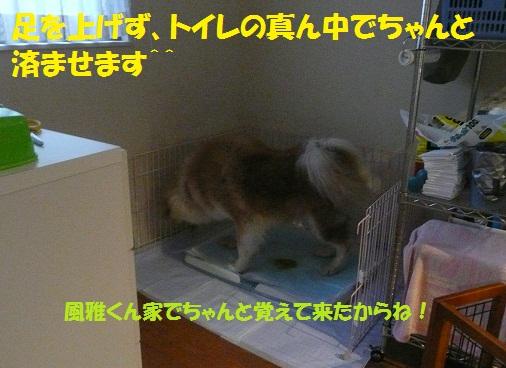 f0121712_15413464.jpg