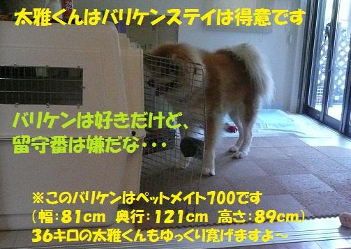f0121712_15592020.jpg