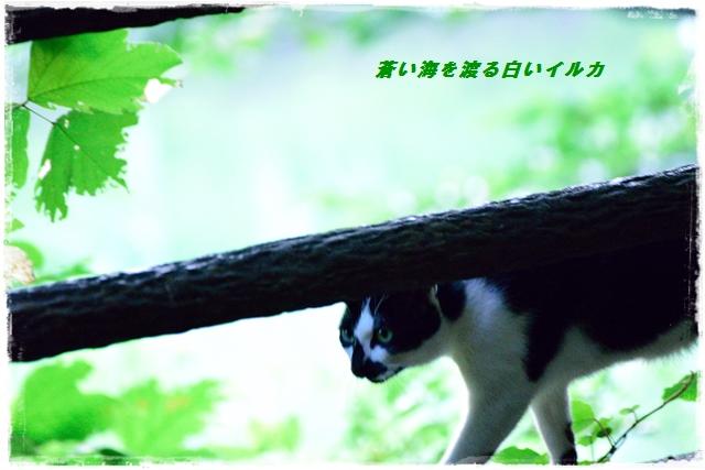 f0304384_20121541.jpg