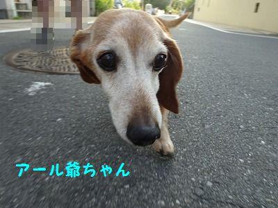 ひーちゃんが帰ってきた_e0222588_18170554.jpg