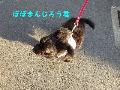 ひーちゃんが帰ってきた_e0222588_18173789.jpg