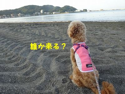 ひーちゃんが帰ってきた_e0222588_18175021.jpg