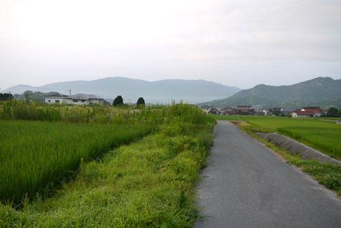 早朝散歩とナズナのドライフラワー_f0222692_8555756.jpg