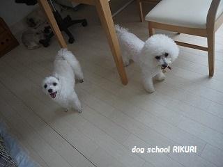 RIKURI幼稚園 - 水曜日編 -_a0284100_13372756.jpg