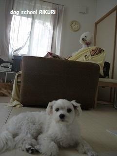 RIKURI幼稚園 - 水曜日編 -_a0284100_13524491.jpg