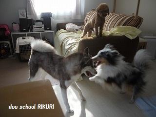 RIKURI幼稚園 - 水曜日編 -_a0284100_14304318.jpg