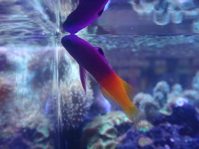 140730 海水魚・淡水魚・金魚_f0189122_12294154.jpg