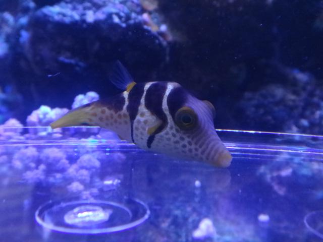 140730 海水魚・淡水魚・金魚_f0189122_12303419.jpg