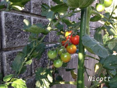 家庭菜園で ニコッと_f0239625_1671684.jpg