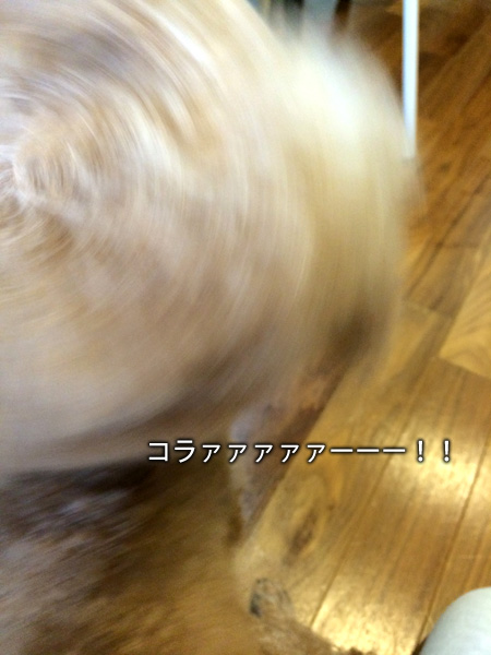 f0269163_16513455.jpg