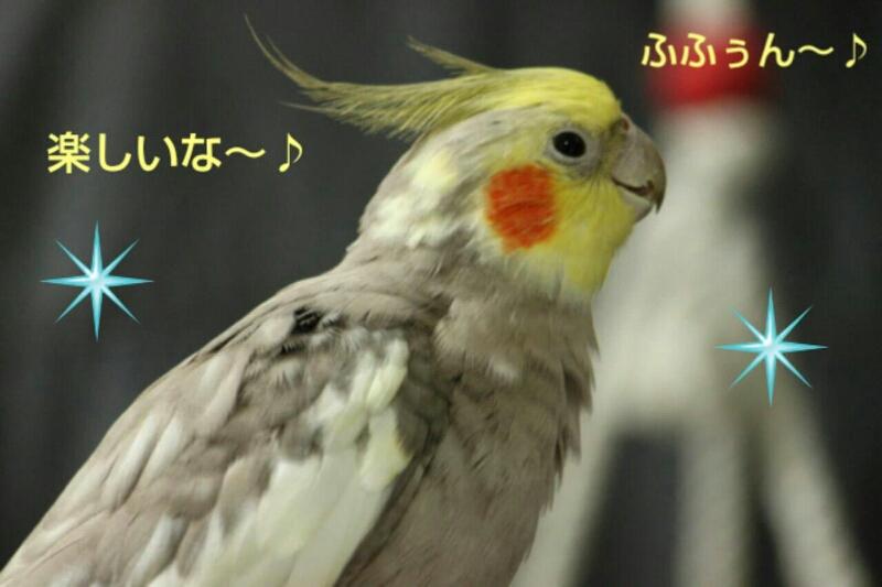 b0062090_174494.jpg