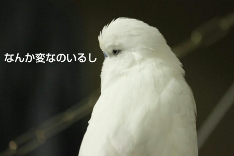 b0062090_1864680.jpg