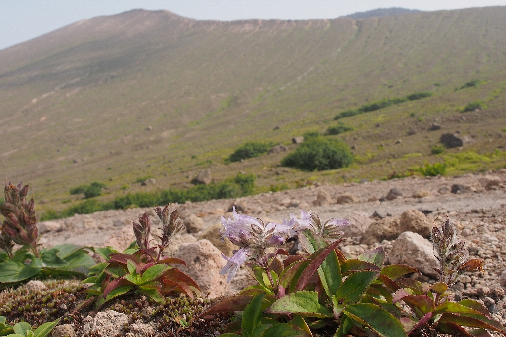 樽前山、7月29日_f0138096_15584093.jpg