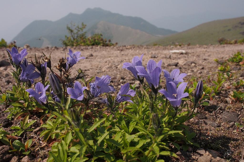 樽前山、7月29日_f0138096_1558537.jpg