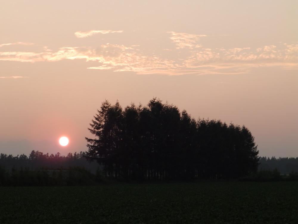 十勝の短い夏の夕暮れ時・・エゾリス君も遊びに来ます。_f0276498_21461684.jpg