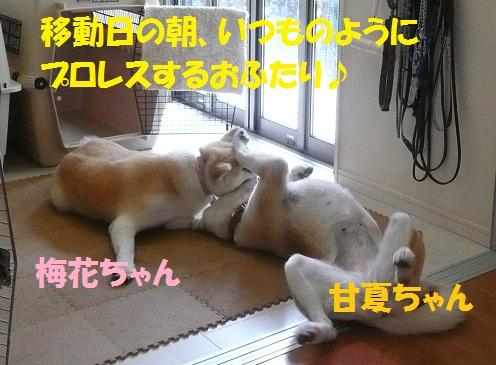 f0121712_1643367.jpg