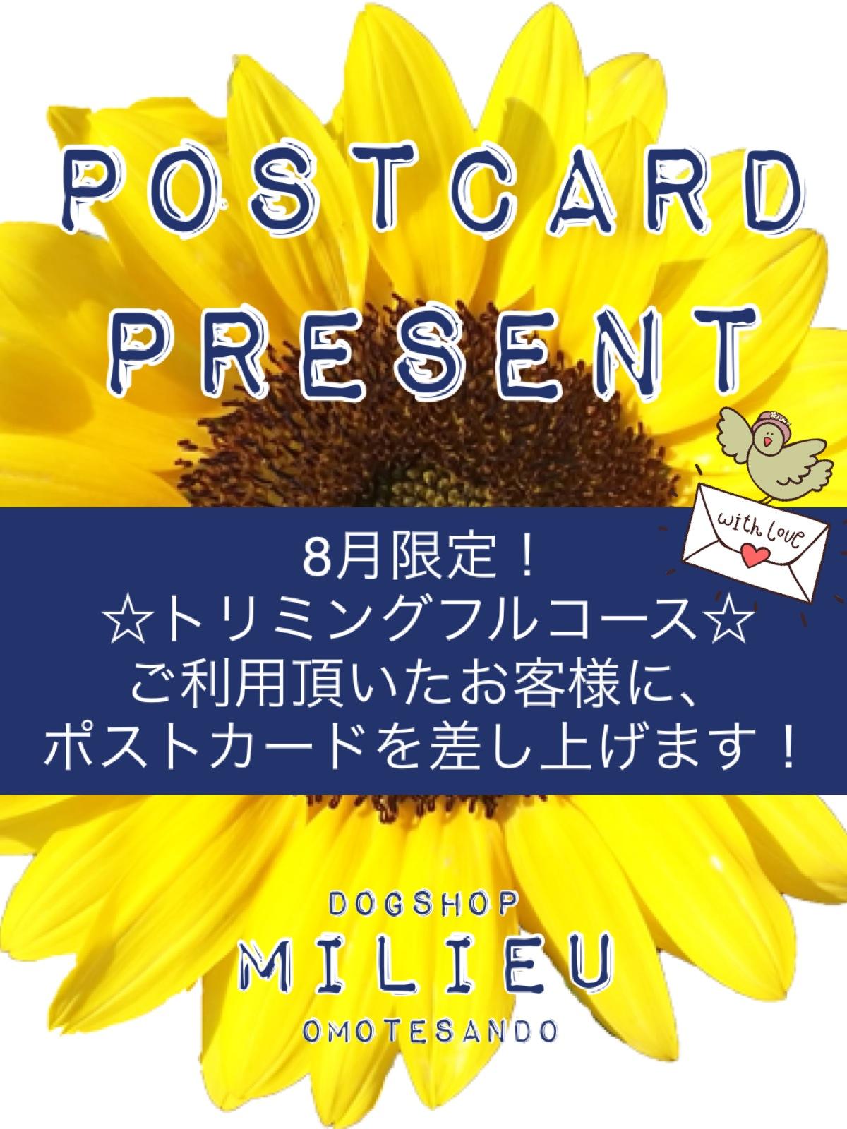 ☆ 8月のキャンペーン ☆_d0060413_10451265.jpg