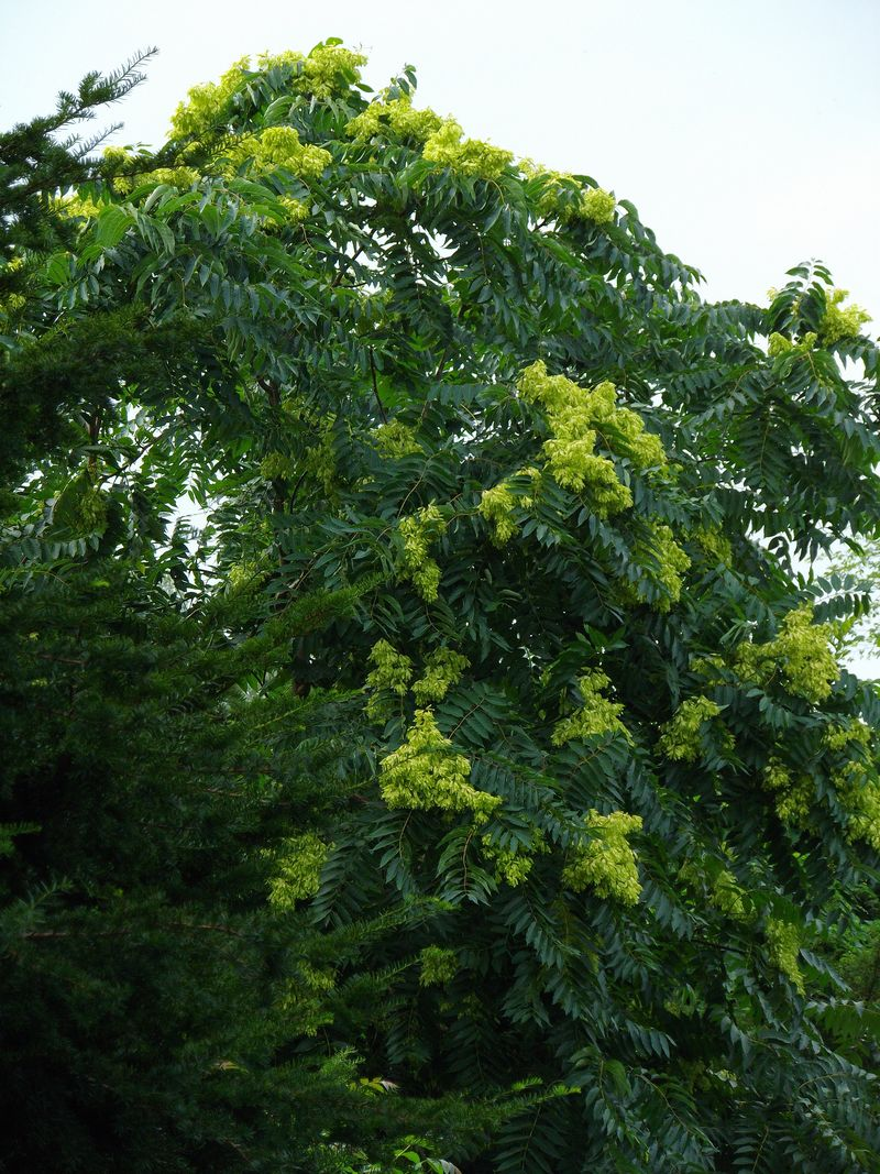 植物は実りの季節モードへ_c0025115_23482828.jpg