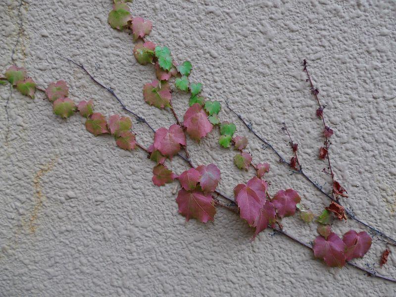植物は実りの季節モードへ_c0025115_23502321.jpg