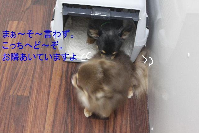 b0130018_010251.jpg