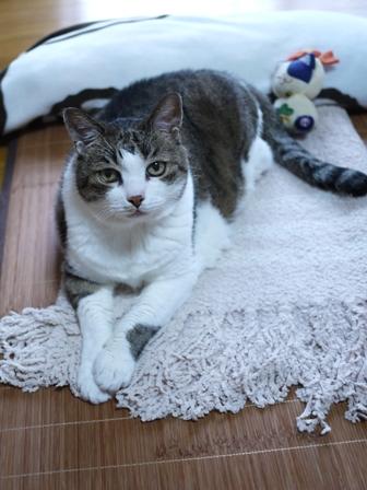 猫のお友だち すずちゃん編。_a0143140_2312173.jpg