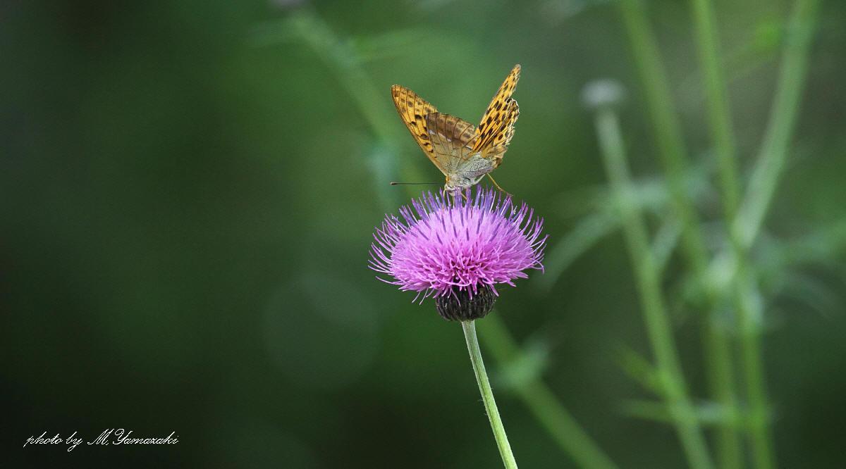 蝶と遊ぶ_c0217255_6405996.jpg