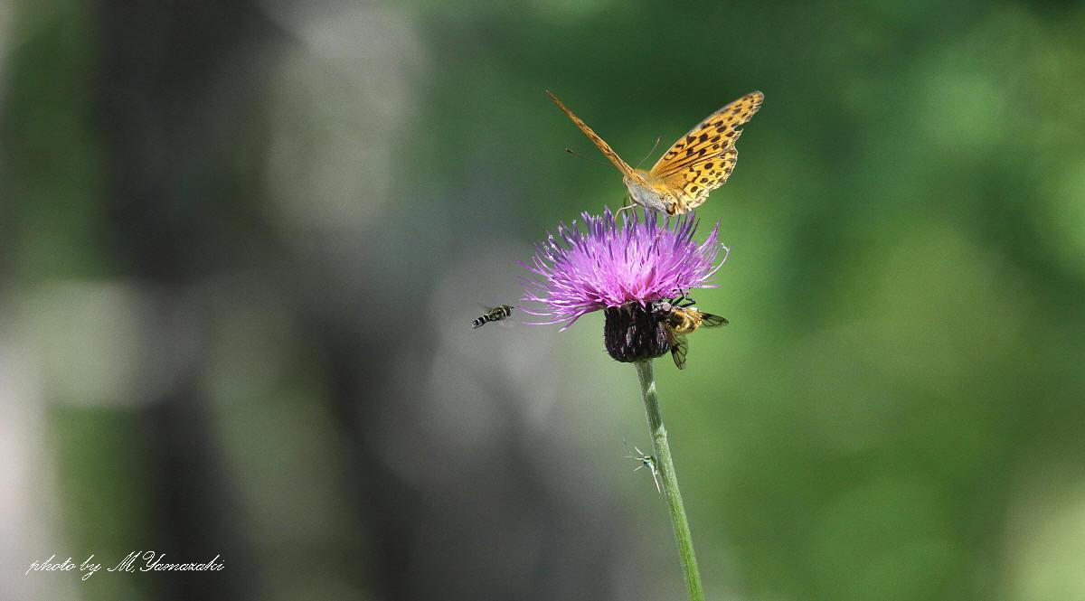蝶と遊ぶ_c0217255_6412975.jpg
