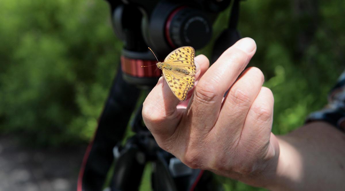蝶と遊ぶ_c0217255_6452862.jpg