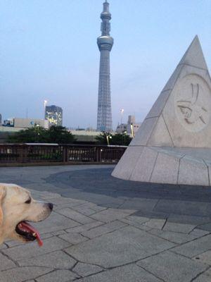 with dog  隅田川テラスからスカイツリーへ♪_a0165160_544079.jpg